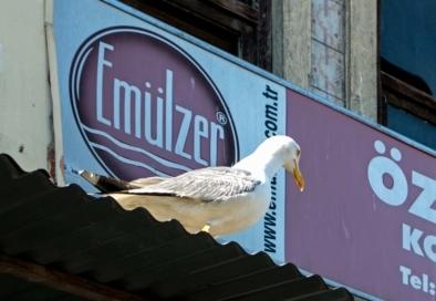 Istanbul signage portals Oliver Lins - Quest, Im Wandel der Zeit